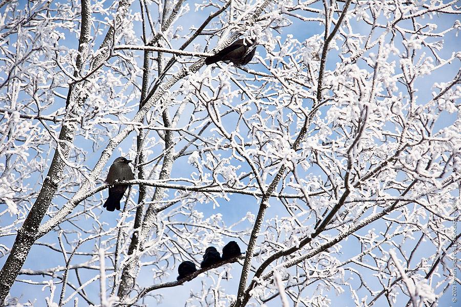 birds900px