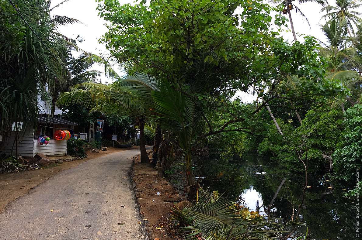 Денге можно заразиться около водоёмов и джунглей.